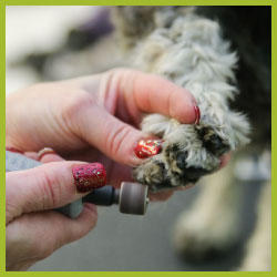 importance of grooming nail trim