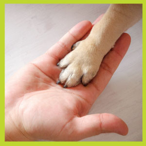 protect dog's paws