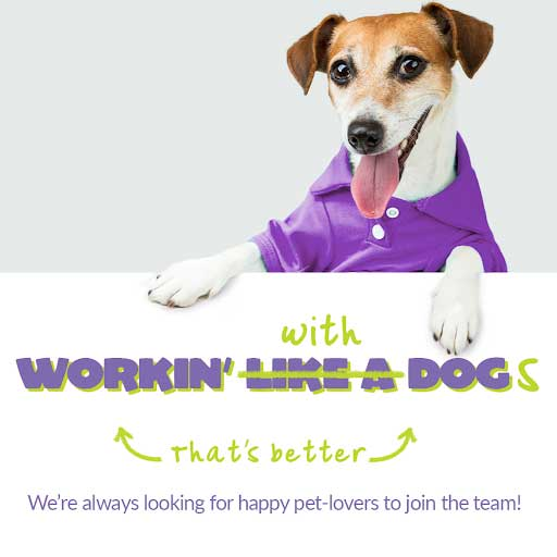If you are searching for pet grooming job positions in {fran_territory_name}, stop by your local Wag N' Wash to learn more about their employment opportunities.