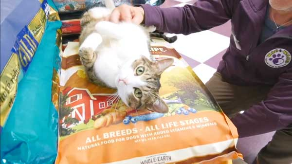 Colorado Springs Pet Food Near You All Natural Dog Food Guidelines